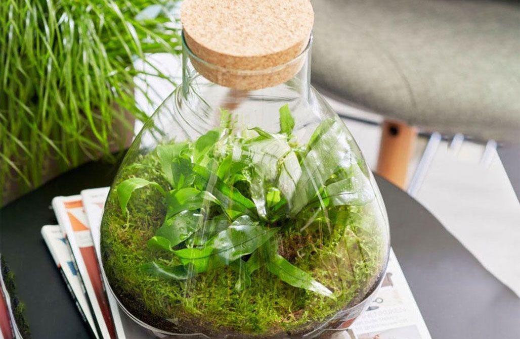 GreenGift Ecoworld