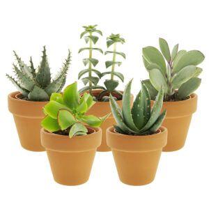 De eenvoudigste mini kamerplant met de bijzonderste vormen