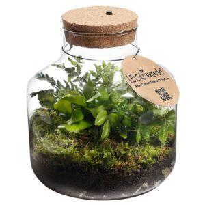 Maak uw eigen Eco-System in een glas met deze complete Ecoworld Biosphere DIY set