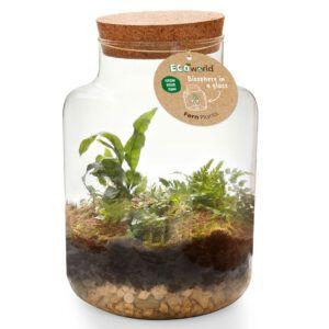 Eco-System in een XL glas voorzien van kurk met verlichting  gevuld met verschillende mini varens.