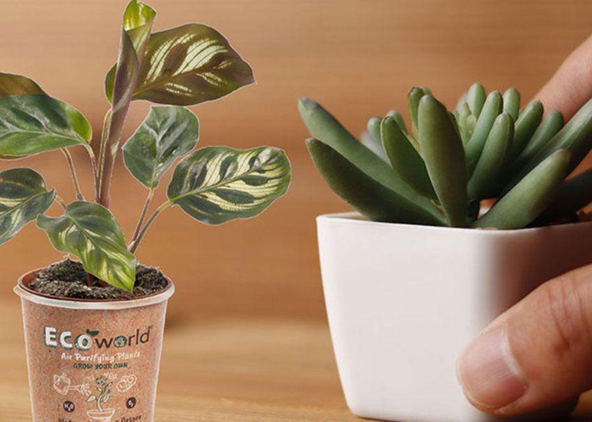 GreenGifts Ecoworld Miniplantjes