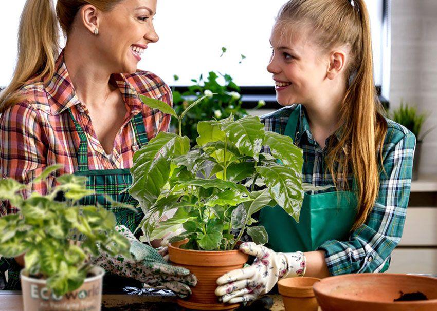GreenGifts Ecoworld planten