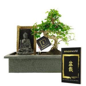 Kom volledig tot rust door deze Boeddha waterval met Bonsai