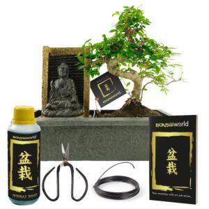 Kom volledig tot rust door deze Boeddha waterval met Bonsai inclusief complete verzorgingsset