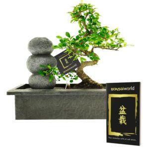 Kom volledig in balans door deze Zen stenen waterval met Bonsai