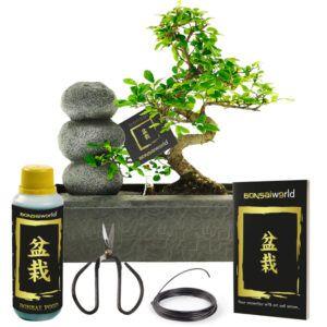Kom volledig in balans door deze Zen stenen waterval met Bonsai inclusief complete verzorgingsset