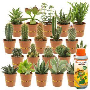 De interieur-trend van dit moment: hippe cactussen en vetplanten