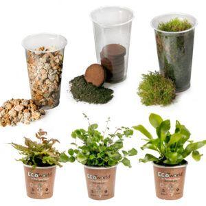 Maak uw eigen Eco-System in een glas met deze complete Ecoworld Ecosysteem DIY set