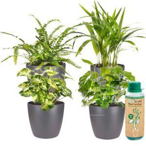 Prachtige mix van 4 verschillende soorten kamerplanten