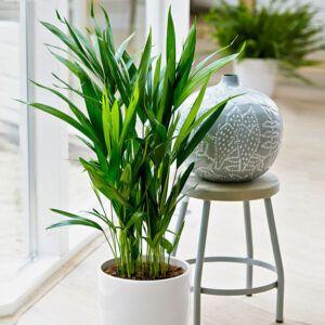 geleverd met 6 luxe kunststof potten in de kleur wit