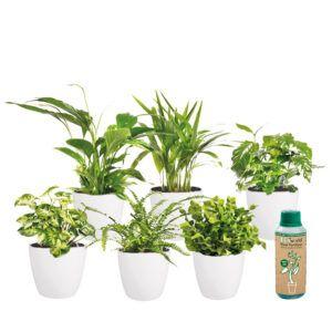 Prachtige mix van 6 verschillende soorten kamerplanten