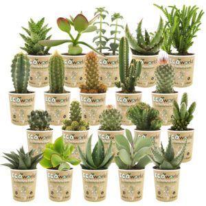 Gevarieerde mix van 20 cactussen en vetplanten