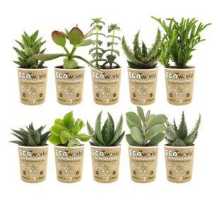Mix van 10 verschillende vetplantjes