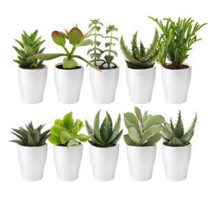 Mix van 10 verschillende vetplantjes met witte potjes
