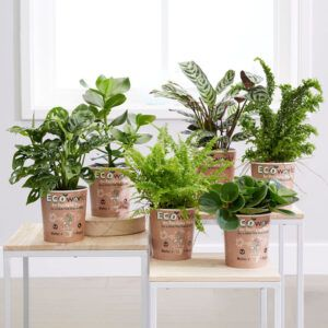 is de Ecoworld Plantenvoeding onmisbaar. Geschikt voor alle bloeiende en groene kamerplanten.