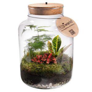 Eco-System in een XL glas voorzien van kurk gevuld met gekleurde kamerplantjes.