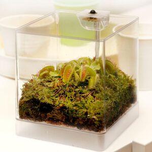 een vleesetende plant met bijzondere klapval in een terrarium met verlichting
