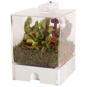 3 verschillende vleesetende planten in een terrarium met 2 kleuren verlichting.