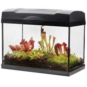Ecosysteem in glazen terrarium met deksel inclusief verlichting