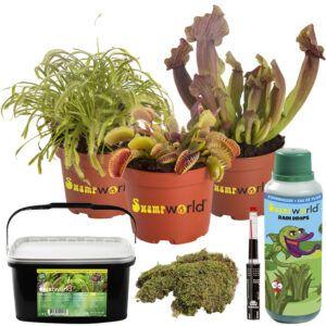 Set van 3 vleesetende planten
