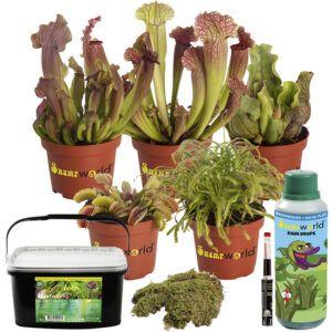 Set van 5 vleesetende planten